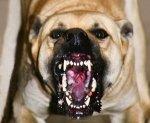 Коли нападають собаки