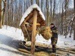 На Буковині диким тваринам під час морозів згодували 30 т сіна та 1 т солі