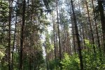 Буковинські МНСники закликають дотримуватися правил безпеки під час відпочинку у лісі