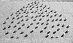 В Чернівцях захисники тварин нагадали владі про те, що потрібно будувати притулки + ФОТОРЕПОРТАЖ