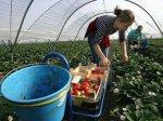 Італія хоче легалізувати українських заробітчан