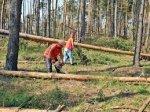 У Сторожинецькому лісгоспі  травмувався  працівник