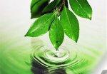 Проблеми екологічного менеджменту та аудиту