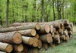 На Сторожинеччині під колодами дерев загинула дитина