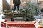 Чиновникам Чернівецької ОДА привезли незареєстровані ялинки