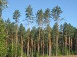 Буковинські військові придумали схему:  безкоштовна оренда землі під виглядом її охорони