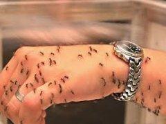До уваги буковинців! Зібрався за кордон –  не забудь про малярію!