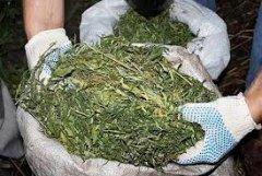 За збут наркотиків чернівчанин відповідатиме перед Законом