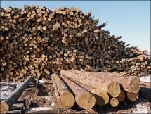 Чернівецьке управління лісового та мисливського господарств спростовує заяву нардепа Москаля