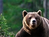 На Прикарпатті чоловік потрапив до реанімації після зустрічі з ведмедем