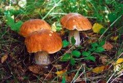 В Кельменцях двоє людей отруїлося грибами