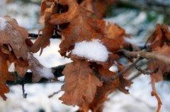 В Карпатах випав сніг. Бабине літо переноситься