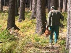 На буковинському кордоні затримали грибника-порушника
