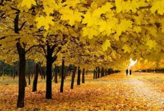 Синоптичний прогноз: у жовтні буде кілька теплих днів