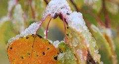 Завтра на Буковині очікується мокрий сніг