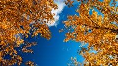 Прощальна пісня бабиного літа: на Буковині очікується потепління до 20 градусів