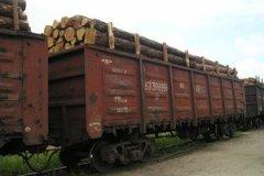 На Буковині прокуратура перевіряє експортерів лісу