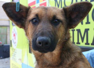 До уваги чернівчан! У місті діє програма стерилізації безпритульних собак