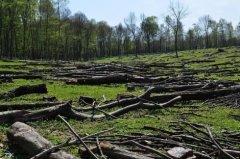 За зрубаний ліс буковинець заплатить 52 тис. гривень