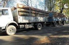 Лісова охорона відкрила мобільну «гарячу лінію» для повідомлень про порушення у лісах Чернівецької області
