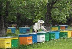 З лісових пасік Сторожинецького лісгоспу зібрали майже тонну меду