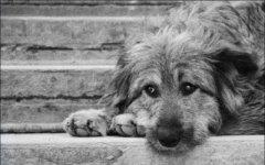 У Чернівцях безпритульні тварини зможуть отримати опікунів