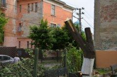 Комунальники Чернівців наполягають, що законно понівечили дерево з пташиними гніздами