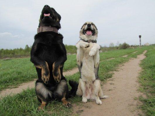 Чернівчан запрошують на безкоштовні курси дресури собак