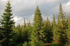 Чернівецькі екологи попсували навколишнє середовище на понад 900 тисяч гривень