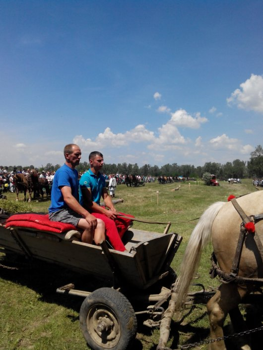 На Буковині відбувся кінний фестиваль «Коні мої, коні»