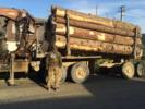 На Буковині тривають оперативно-слідчі заходи СБУ у лісопереробній галузі стосовно службових осіб