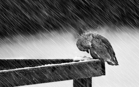 На Буковині - значне погіршення погоди: дощі, мокрий сніг, пориви вітру