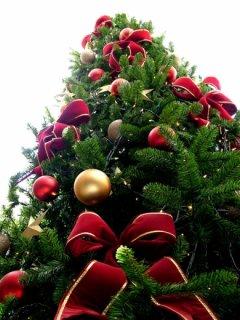 Головну ялинку в Чернівцях буде відкрито 19 грудня