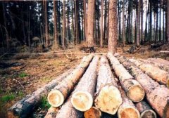На Путильщині майстер лісу незаконно збував лісодеревину