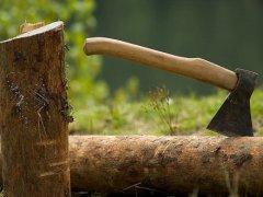 На Буковині майстер лісу допустив вирубку 2,5 га лісу