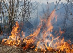 Буковинців попереджають про небезпеку спалювання сухої трави