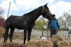 Конфлікт з конем в Умані: Хто був за кермом іномарки, чому тварини опинились на трасі та скільки насправді було коней