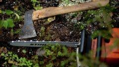 Герцаївське лісництво відшкодує державі понад 500 тис. грн. збитків