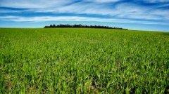 На Кіцманщині депутати районної ради своїм рішенням відмежували понад 470 га землі загальною вартістю 112 млн. грн.