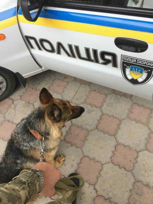 На Буковині прикордонник-кінолог зі службовим собакою допоміг виявити злодія 10 тисяч гривень