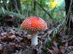 Буковинка потрапила до реанімації, поївши грибів