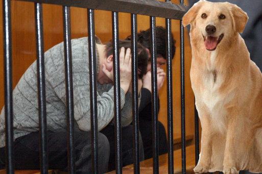 Новим законом збільшено кримінальну відповідальність за жорстоке поводження з тваринами