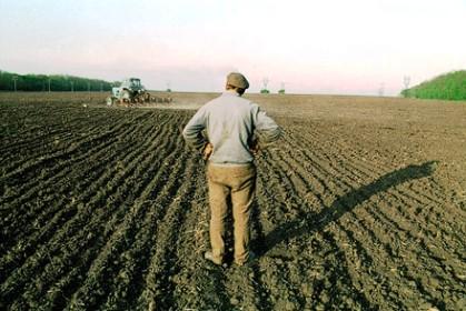 Як буковинцю зареєструвати право на земельну ділянку?