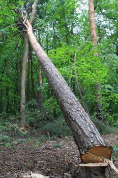 Двоє буковинців нарубали дерев на 136 тисяч гривень
