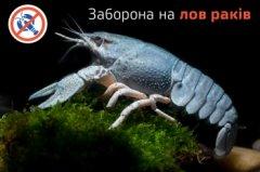Відсьогодні на Буковині заборонено вилов раків