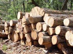 Обсяги експорту лісоматеріалів з Буковини до ЄС зменшено утричі