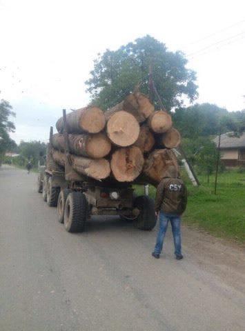На Буковині СБУ затримала вантажівку з незаконно вирубаною деревиною