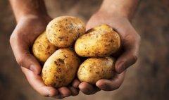Стало відомо, як картопля для воїнів АТО потрапила у київський ресторан