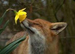 В Чернівцях запах весни та перевиборів міськзради