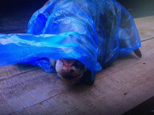 Українському депутату підкинули відрізану голову